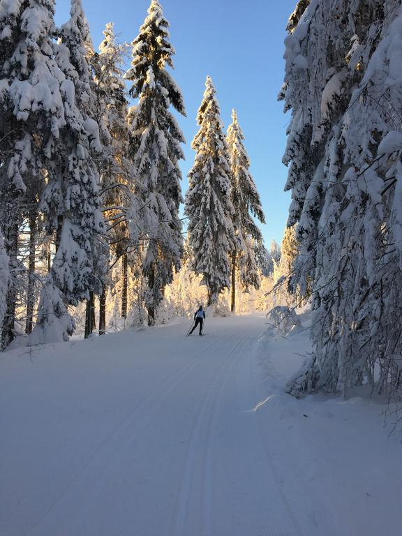Langlauf im Bayerischen Wald