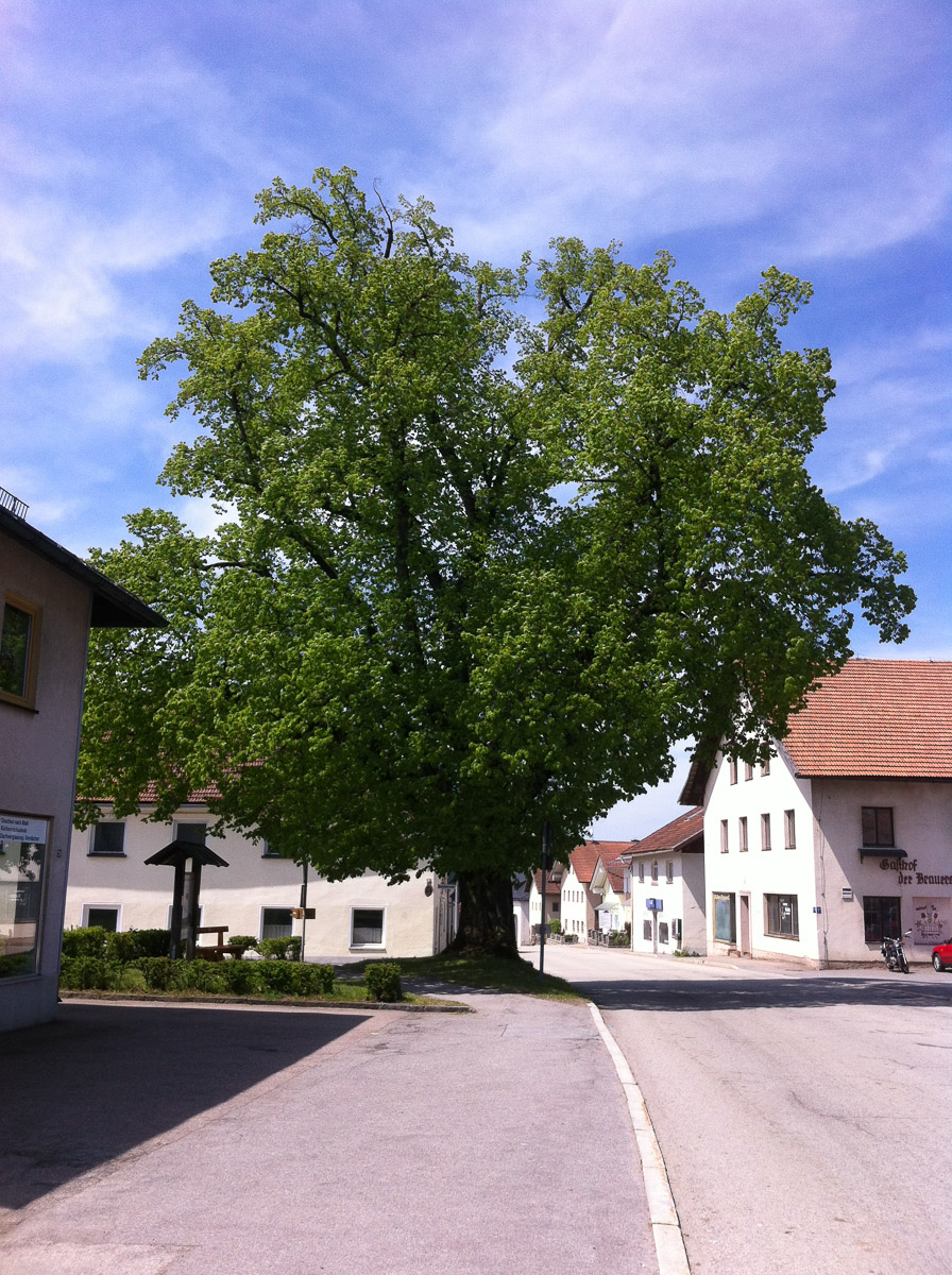 Jandelsbrunn